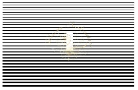 Flexible Stripes Small Edition Black